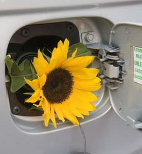 flower-in-gas-tank-fill-opeinging-icon