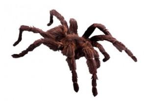 spider-icon