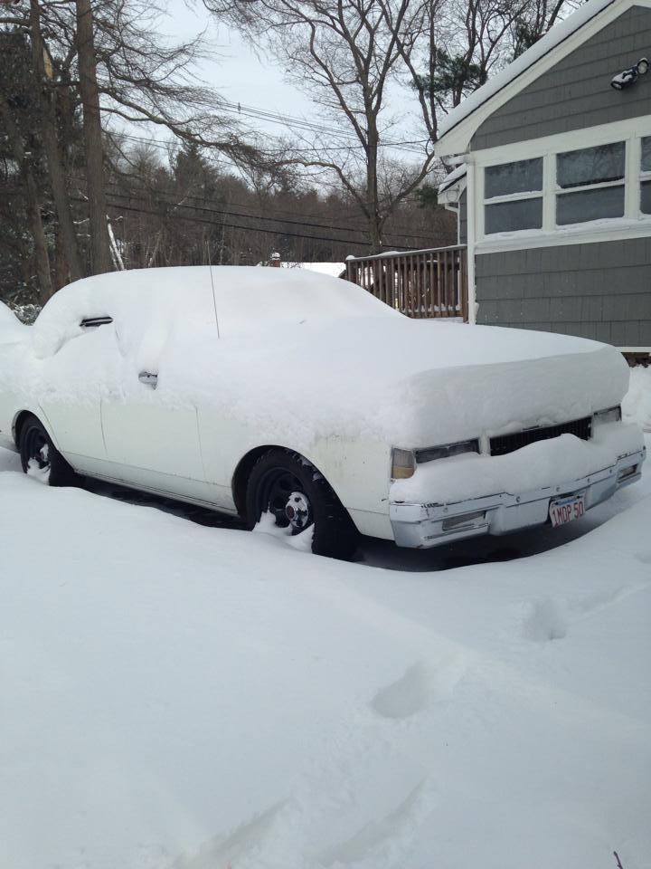 caprice-in-snow