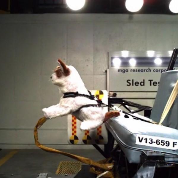 Pet crash tests