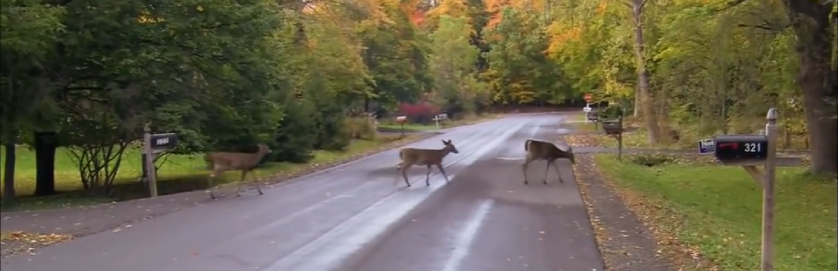 blog avoid hitting deer with your