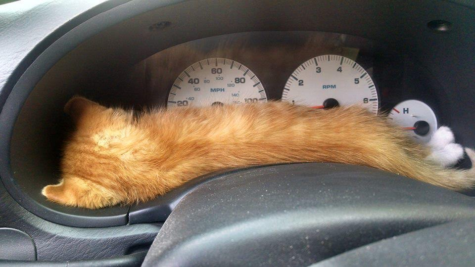 Cat In Car1